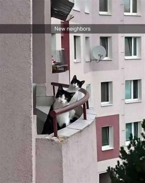funny-cat-snapchats-20