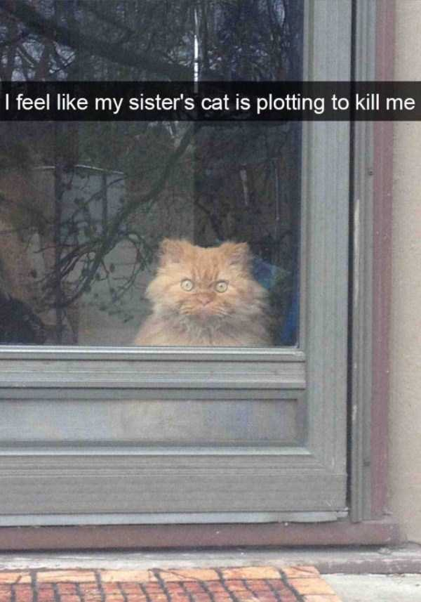 funny-cat-snapchats-21