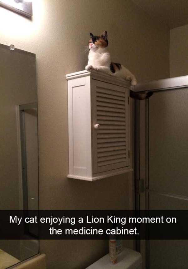 funny-cat-snapchats-22