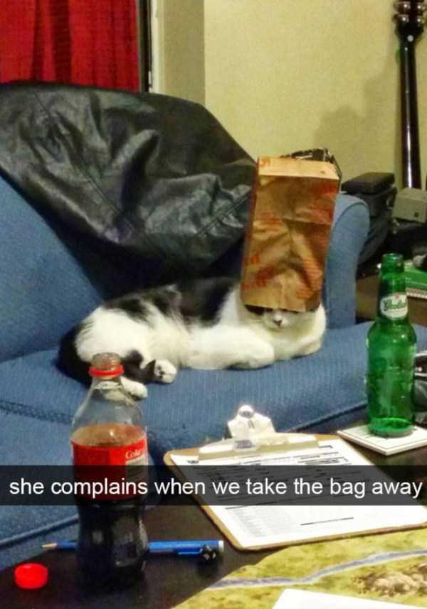 funny-cat-snapchats-23