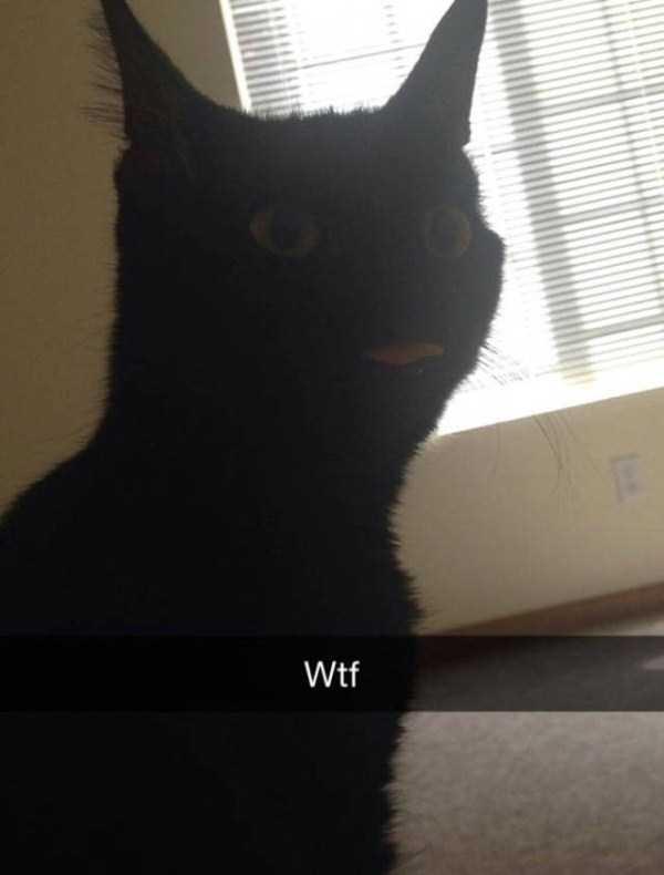 funny-cat-snapchats-25