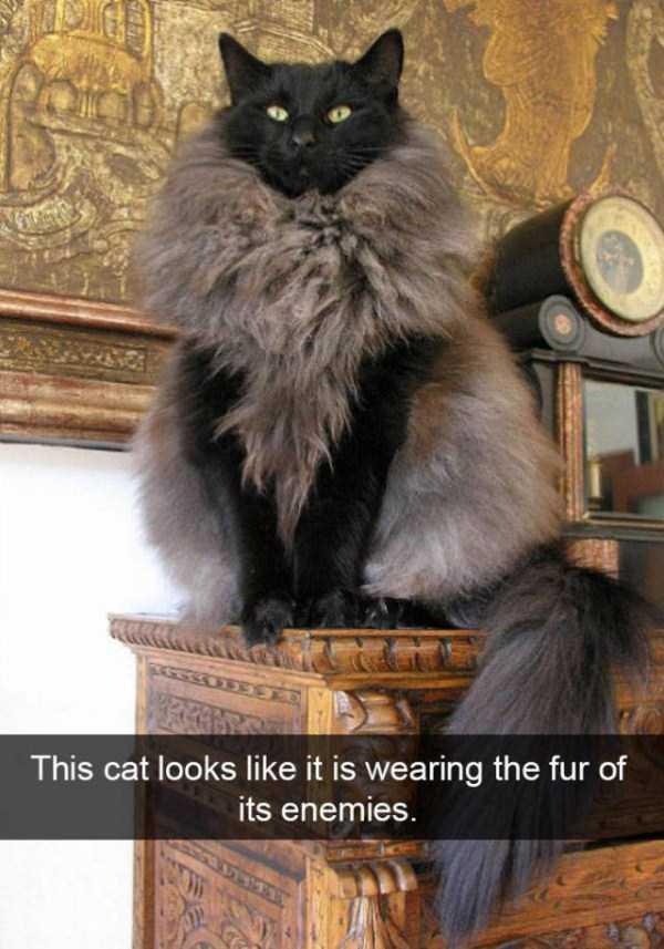 funny-cat-snapchats-28