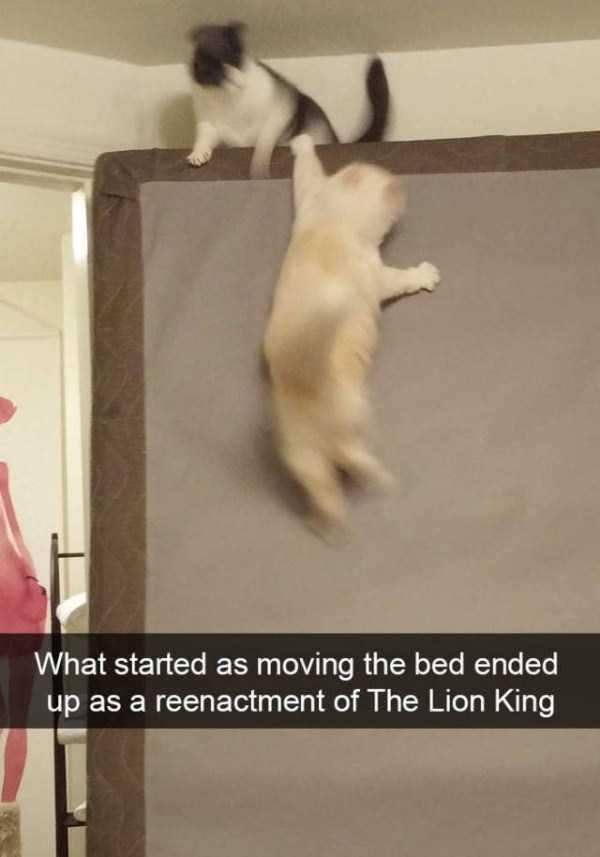 funny-cat-snapchats-29