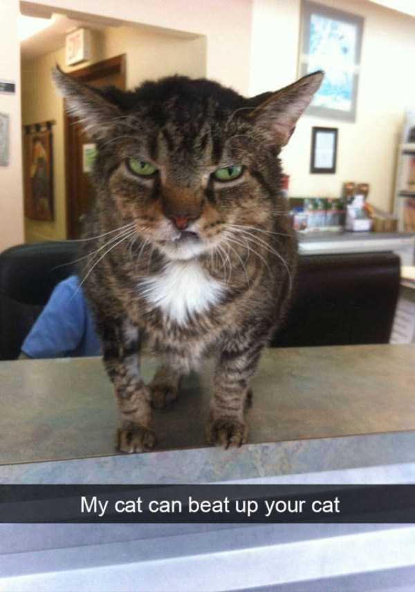 funny-cat-snapchats-30