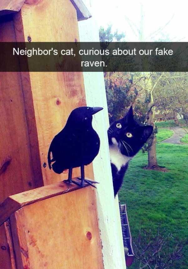 funny-cat-snapchats-31