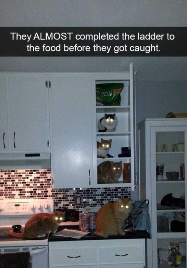 funny-cat-snapchats-32