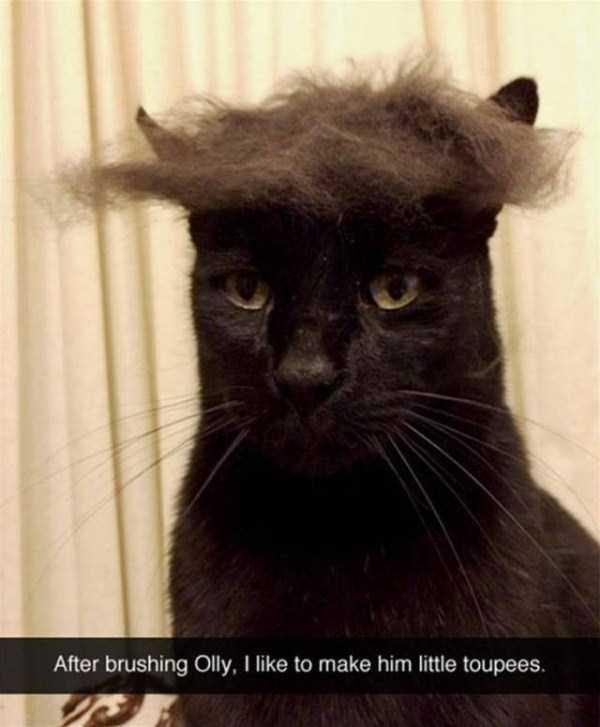 funny-cat-snapchats-33