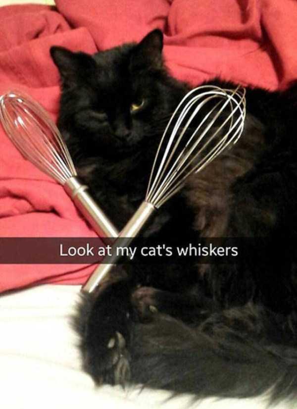 funny-cat-snapchats-34