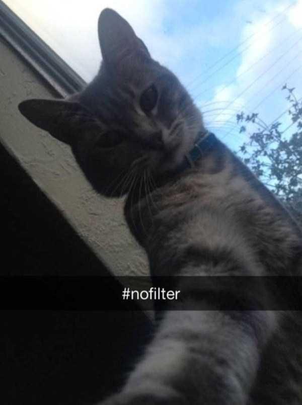 funny-cat-snapchats-35