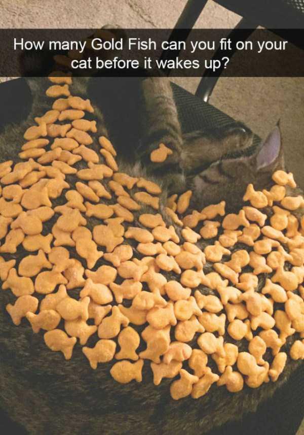 funny-cat-snapchats-36