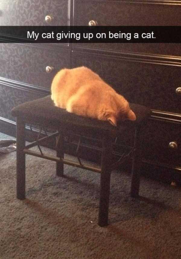funny-cat-snapchats-37