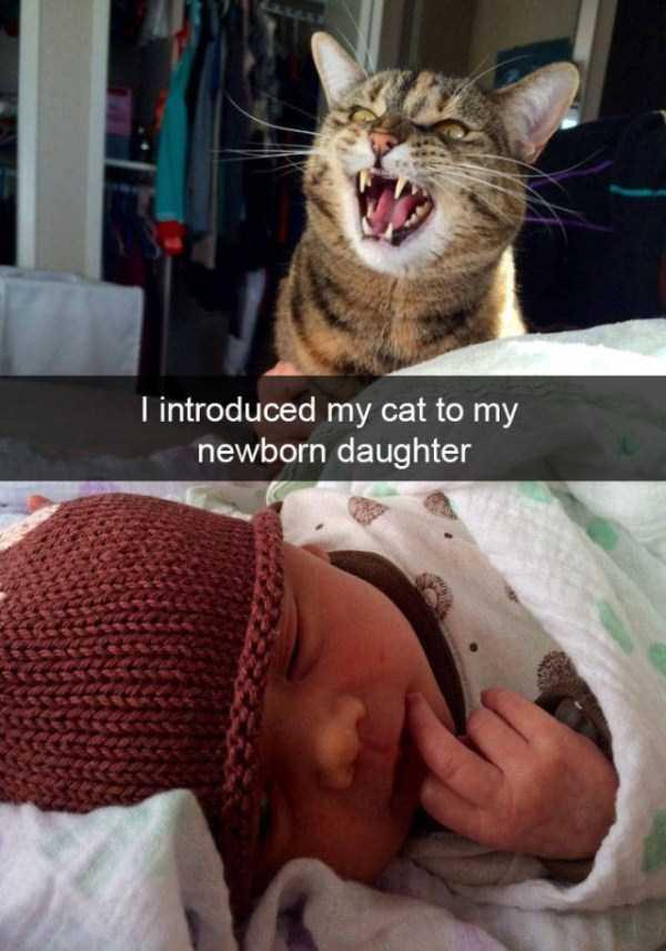 funny-cat-snapchats-4