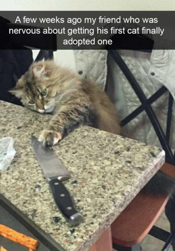 funny-cat-snapchats-40