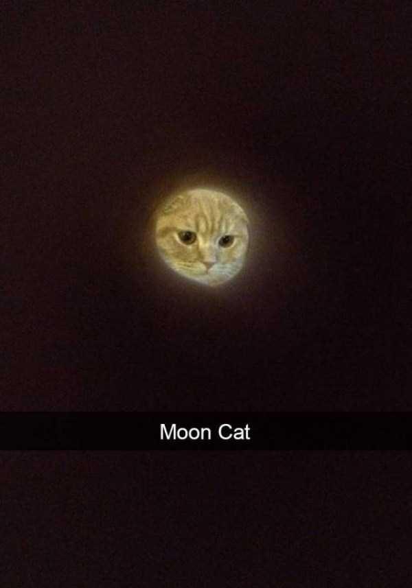 funny-cat-snapchats-41