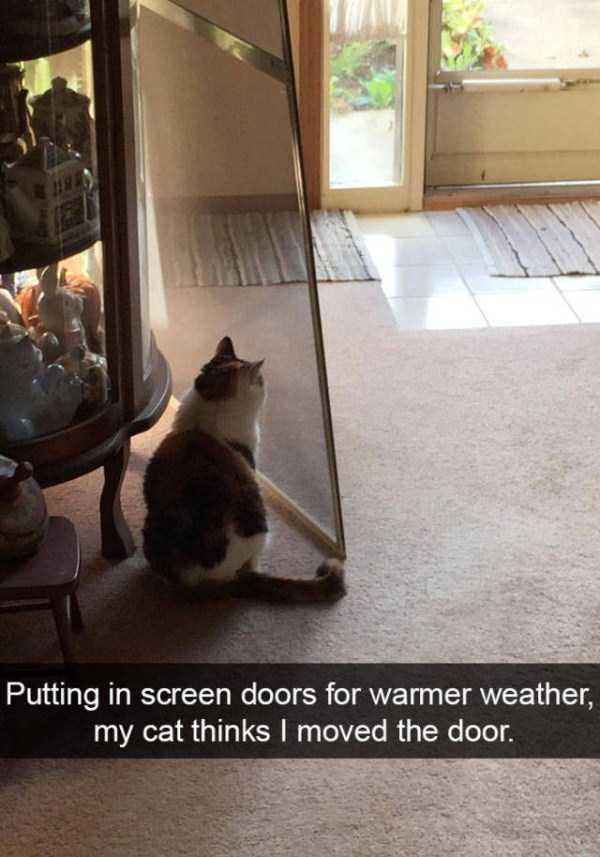 funny-cat-snapchats-42