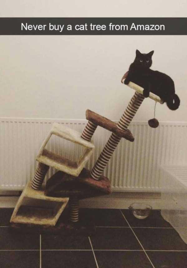 funny-cat-snapchats-43