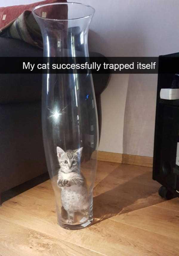 funny-cat-snapchats-45