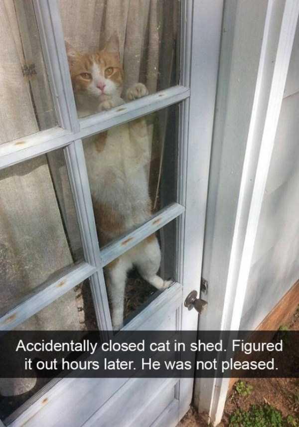 funny-cat-snapchats-46
