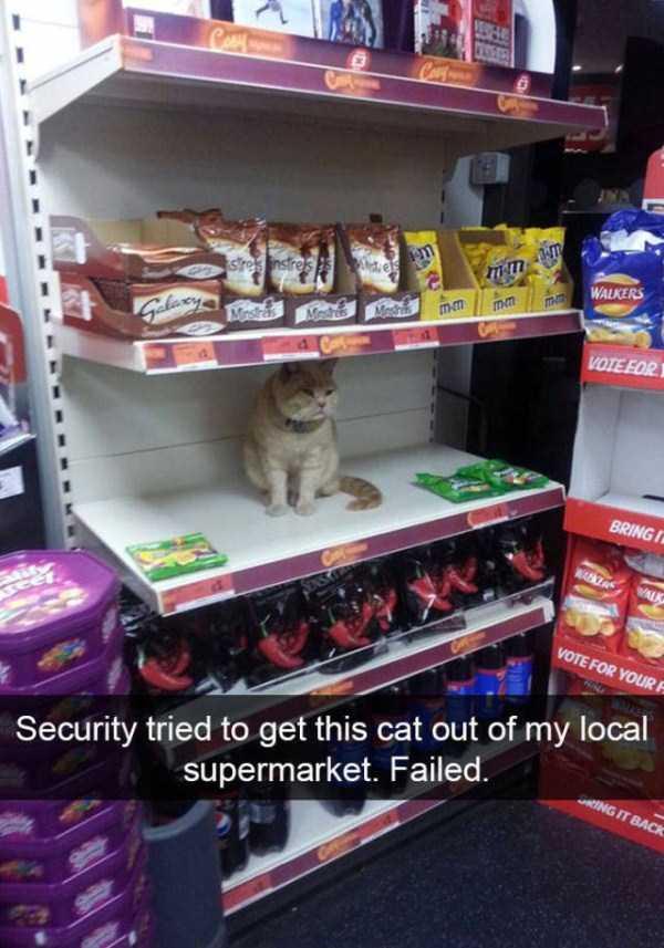 funny-cat-snapchats-47