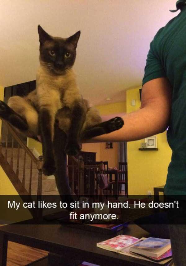 funny-cat-snapchats-48