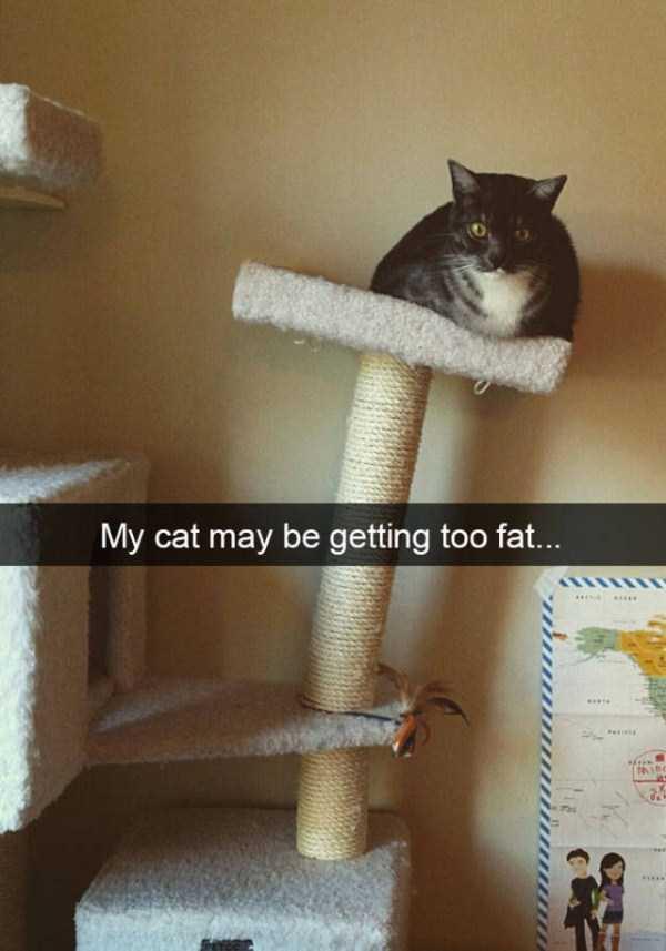 funny-cat-snapchats-49