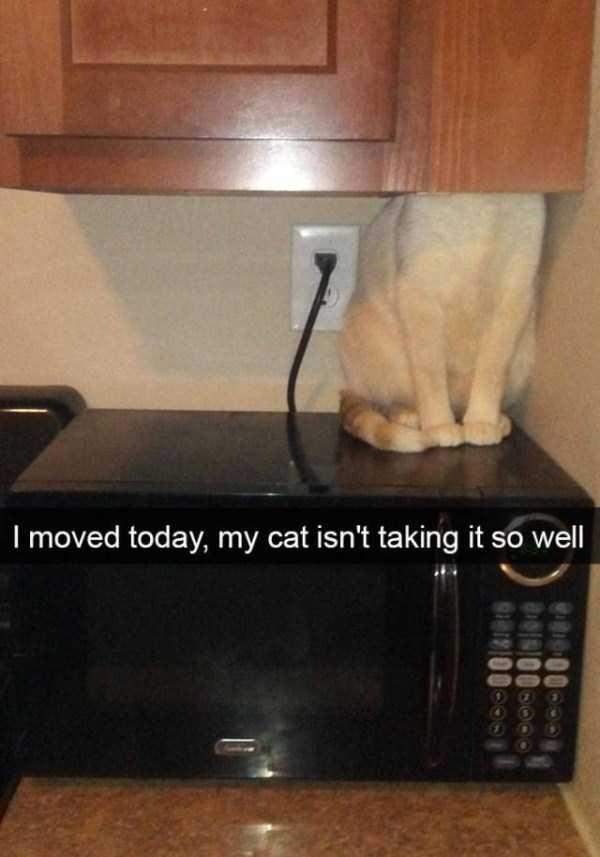 funny-cat-snapchats-5