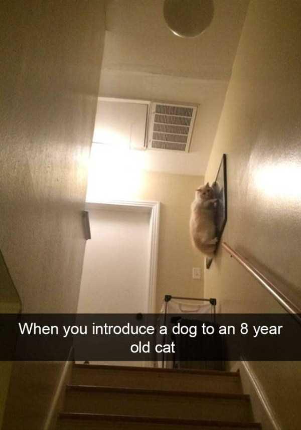 funny-cat-snapchats-51