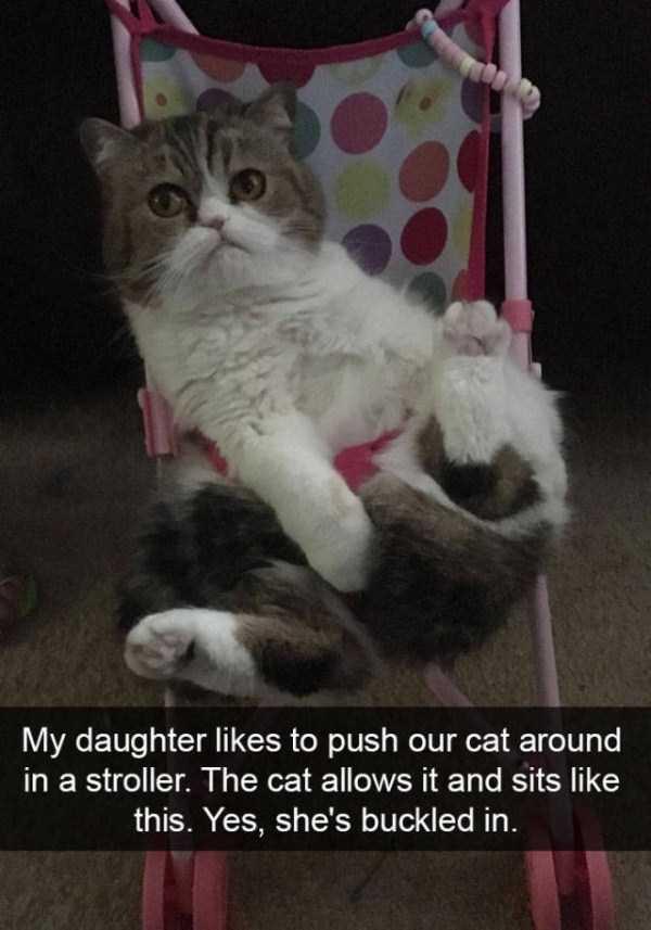 funny-cat-snapchats-53