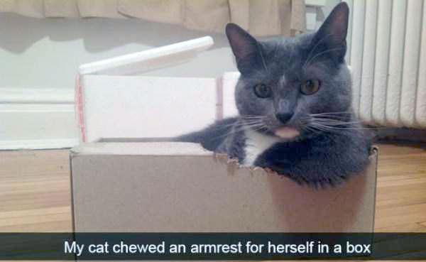 funny-cat-snapchats-54