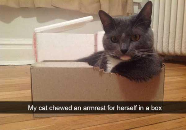 funny-cat-snapchats-6