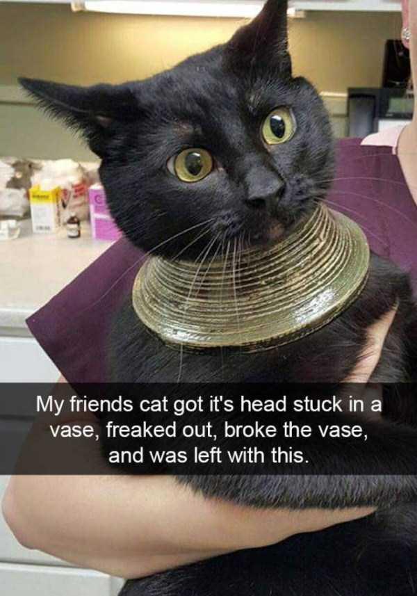 funny-cat-snapchats-7
