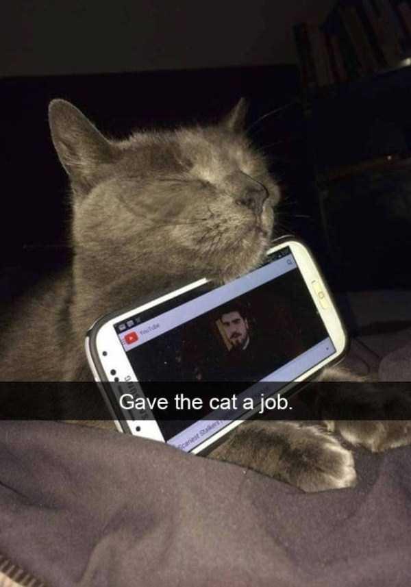 funny-cat-snapchats-8