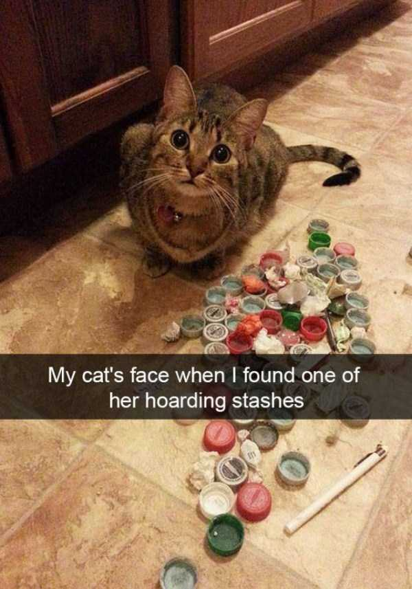 funny-cat-snapchats-9
