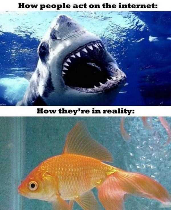 funny-expectations-vs-reality-9