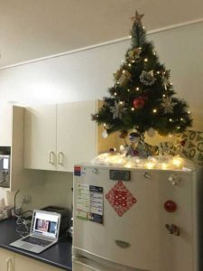christmas-trees-protected-from-pets (10)
