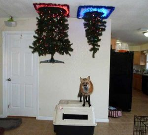 christmas-trees-protected-from-pets (13)