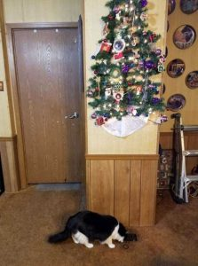 christmas-trees-protected-from-pets (15)