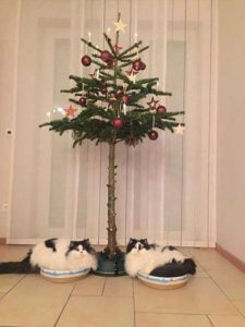 christmas-trees-protected-from-pets (24)