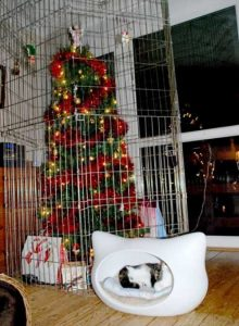 christmas-trees-protected-from-pets (29)