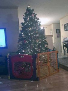 christmas-trees-protected-from-pets (33)