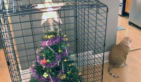 christmas-trees-protected-from-pets-(36)