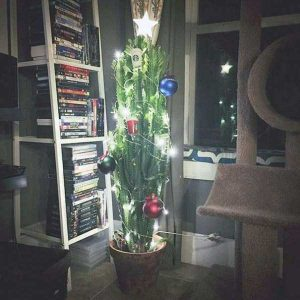 christmas-trees-protected-from-pets (5)