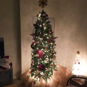 christmas-trees-protected-from-pets (8)