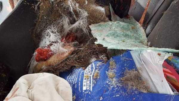 deer-crash-aftermath (7)