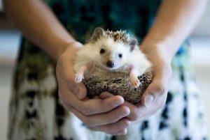 funny-cute-hedgehogs (19)