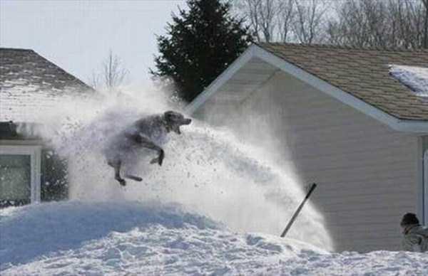 funny-winter-pics-14