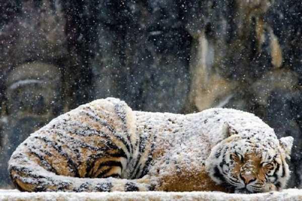funny-winter-pics-25