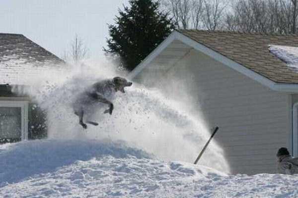 funny-winter-pics-3