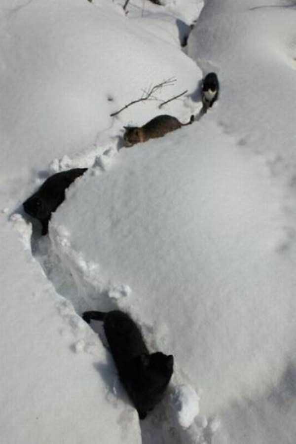 funny-winter-pics-44