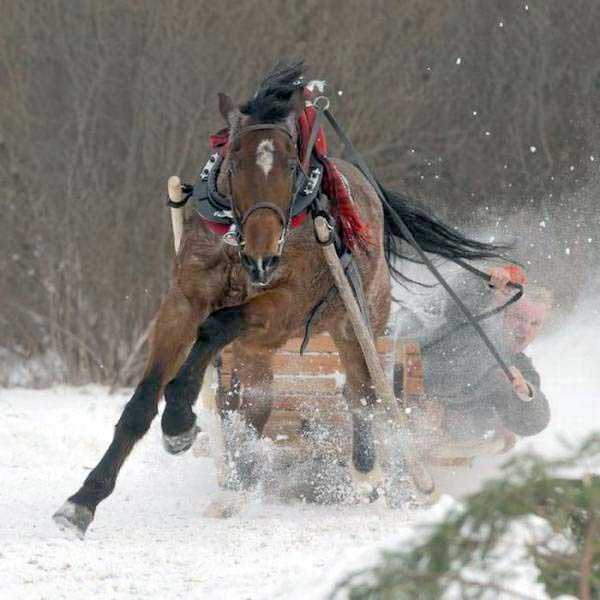 funny-winter-pics-47